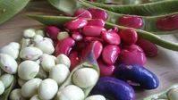 Comer judías, guisantes, garbanzos o lentejas puede ayudar a perder peso y no recuperarlo